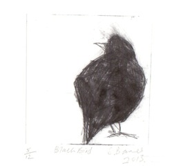 'Blackbird' Drypoint Print by Samantha Barnes.  Edition of 12 only